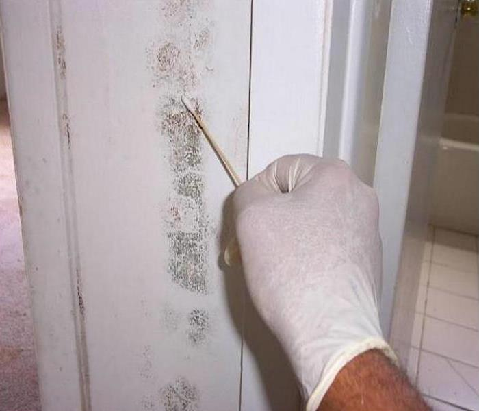 Mold Damage – Chicago Bathroom