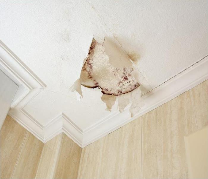 Why SERVPRO Our Team At SERVPRO Can Remove Stains Left Behind By Mold In Your Chicago Home