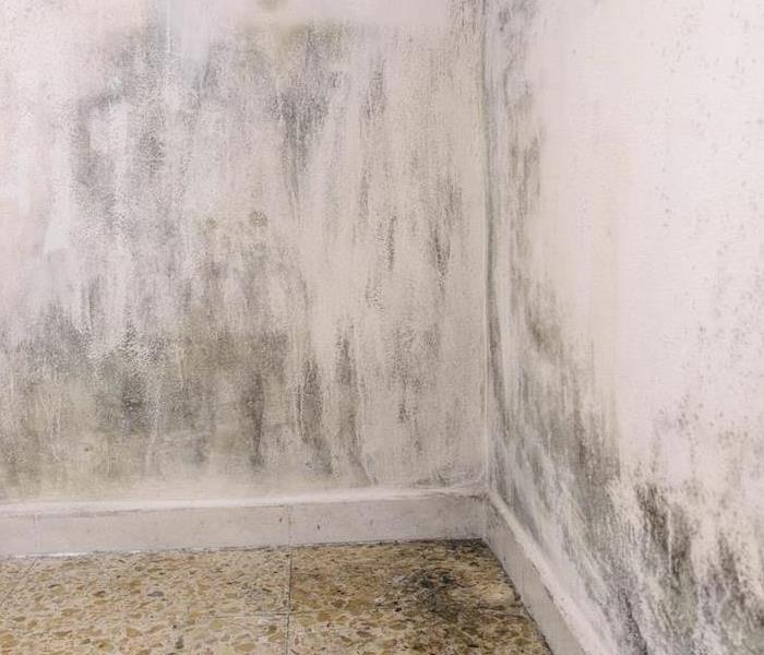 Mold Remediation How to Seal Up and Contain Mold Damage in Mount Greenwood Homes