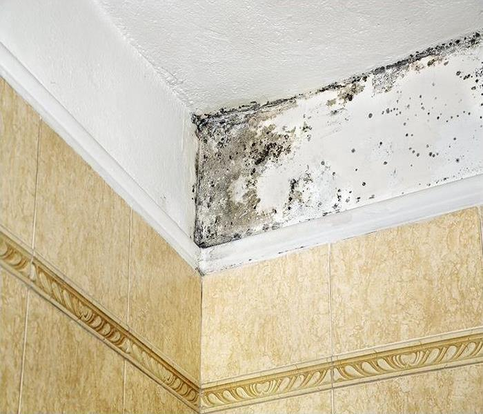 Mold Remediation Our Experts Explain How Mold Can Be Prevented By Your Exhaust System In Your Chicago Bathroom