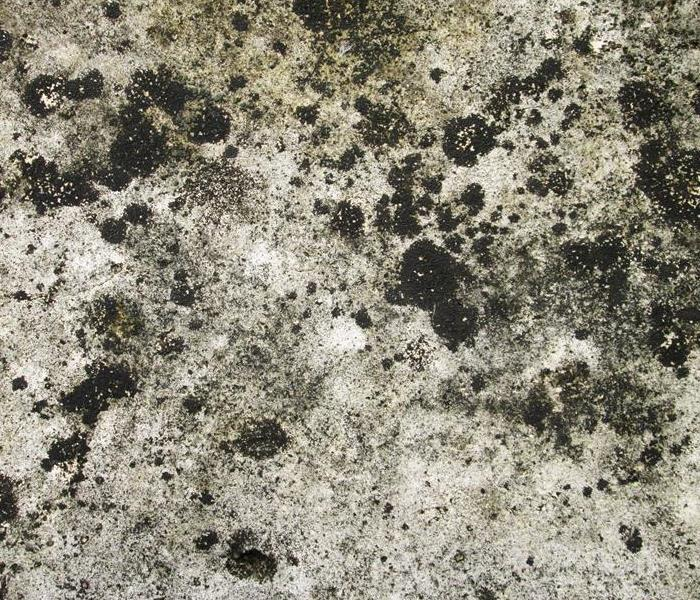 Mold Remediation Remediation Guidelines for Mold Damage
