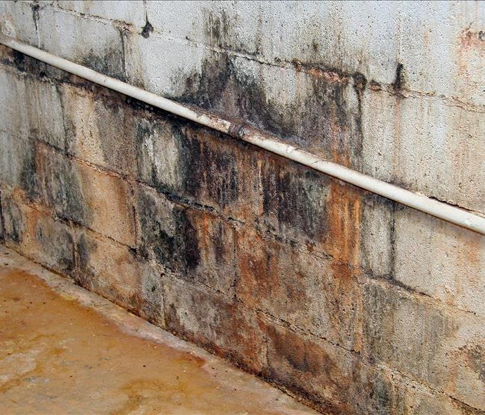 mold damage covering a concrete block wall