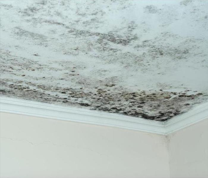 Mold Remediation Some Mistakes When Dealing With Chicago Mold Damage That You Should Avoid