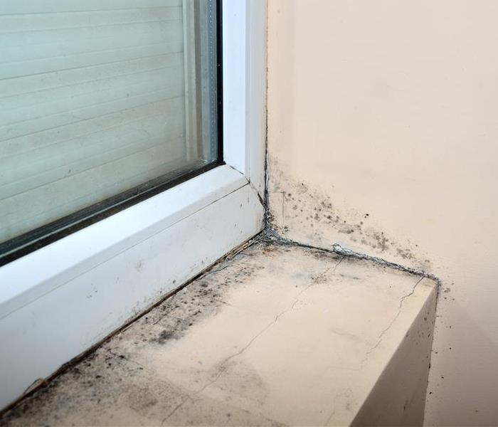 Mold Remediation Mold Damage Chicago: Better Sooner Than Later for Cleaning