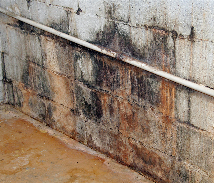 Mold Remediation Your House is More Susceptible To Mold Damage in the Summer Months